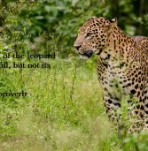 African proverb of the day 14/11/2015