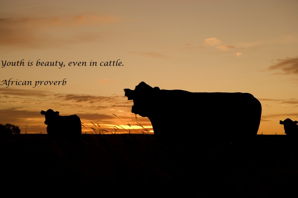 cattle-640985_960_720