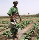 Agriculture in Zambia set to be next big business