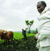 Ethiopian farmers need urgent assistance to feed country caught in major drought