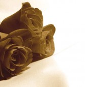 Poetry corner: The last brown rose