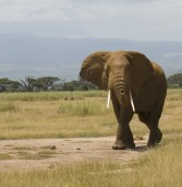 Poaching crippling African heritage and tourism