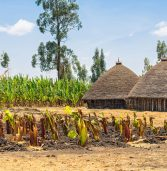 Done sensibly, agricultural development can reduce poverty in Africa