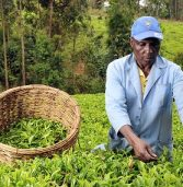 NPO expands smallholder farmer services to malawi and uganda