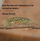 African proverb of the day 06/05/2016