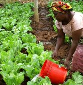 African farmers need crucial help for the coming season