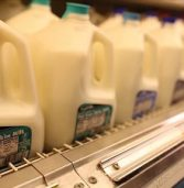 Processed Milk, Yoghurt and Milk Powder Dominate the Africa Dairy Market