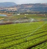 SA pursues agriculture trade improvement