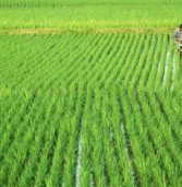 How does agricultural development trigger economic growth?