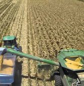 Highest maize harvest for SA in 4 decades