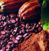 Big ambitions for cocoa industry – Ghana