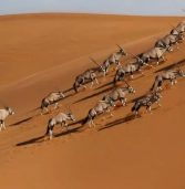 Why is Namibia a remarkable tourism story?